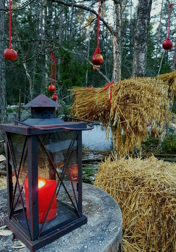 Julkärve i Trolska skogen, Hälsingland